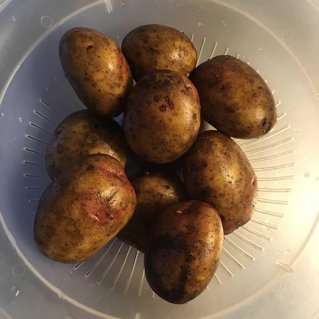 Potatismos - tips och trix för gott mos.